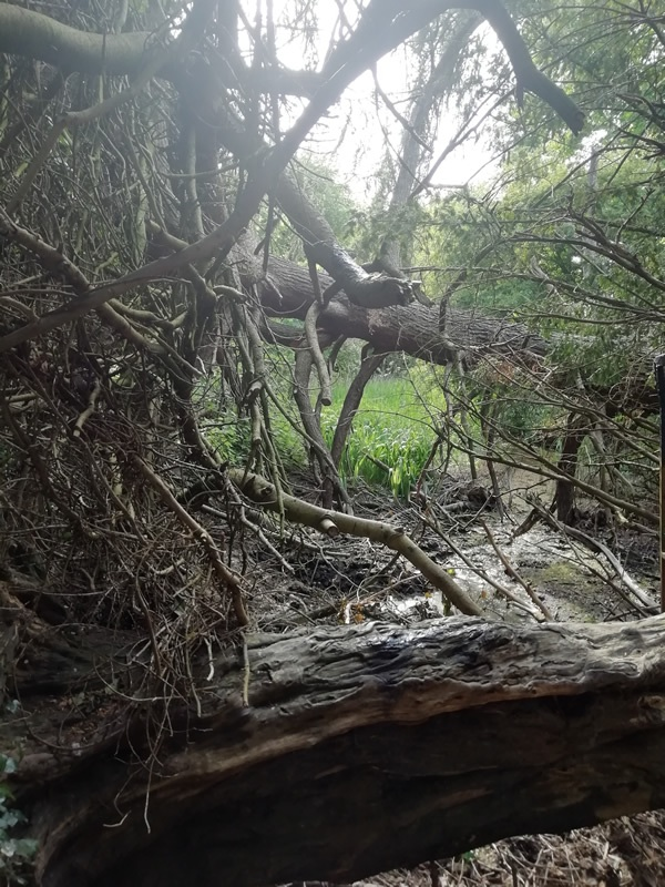 fallen-branches